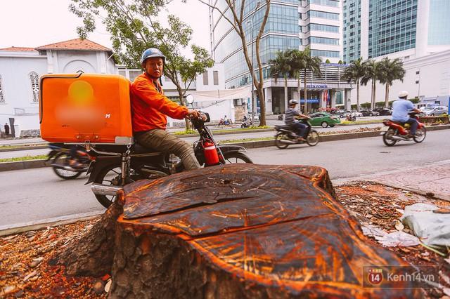 Chùm ảnh: Đường Tôn Đức Thắng trước và sau khi hàng trăm cây xanh bị đốn hạ để phát triển thành phố - Ảnh 13.