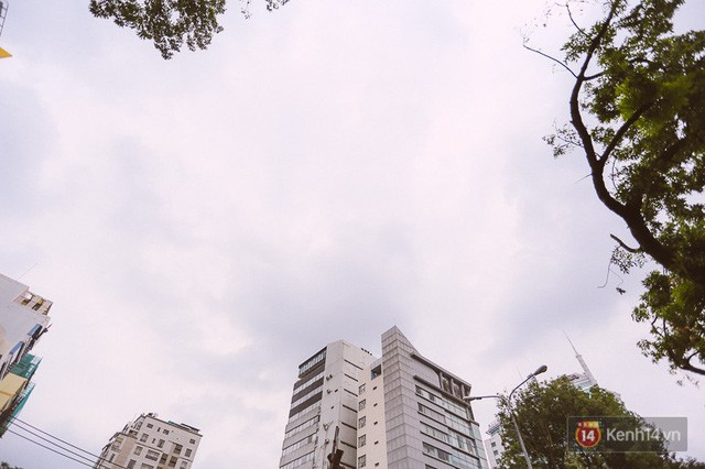 Chùm ảnh: Đường Tôn Đức Thắng trước và sau khi hàng trăm cây xanh bị đốn hạ để phát triển thành phố - Ảnh 17.