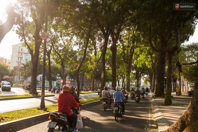 Chùm ảnh: Đường Tôn Đức Thắng trước và sau khi hàng trăm cây xanh bị đốn hạ để phát triển thành phố - Ảnh 18.