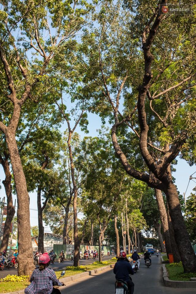 Chùm ảnh: Đường Tôn Đức Thắng trước và sau khi hàng trăm cây xanh bị đốn hạ để phát triển thành phố - Ảnh 4.