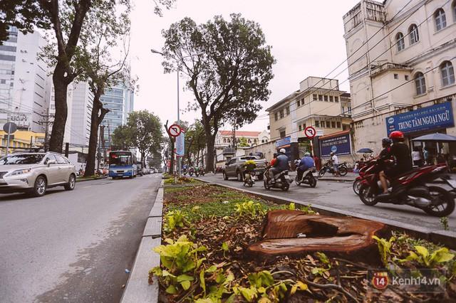 Chùm ảnh: Đường Tôn Đức Thắng trước và sau khi hàng trăm cây xanh bị đốn hạ để phát triển thành phố - Ảnh 7.