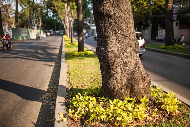 Chùm ảnh: Đường Tôn Đức Thắng trước và sau khi hàng trăm cây xanh bị đốn hạ để phát triển thành phố - Ảnh 8.