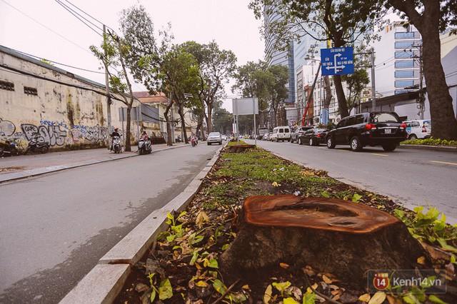 Chùm ảnh: Đường Tôn Đức Thắng trước và sau khi hàng trăm cây xanh bị đốn hạ để phát triển thành phố - Ảnh 9.