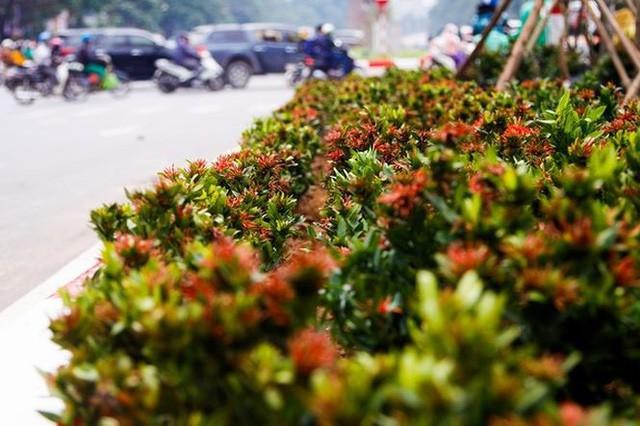 Ngắm đường 10 làn xe đẹp nhất Việt Nam tại Hà Nội - Ảnh 7.