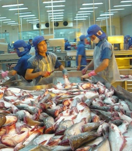 Lý do giúp cá tra tăng giá kỷ lục từ trước đến nay - Ảnh 1.