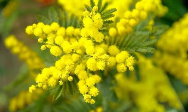 Vì sao đàn ông nên tặng hoa cho người yêu thương của mình trong ngày 8/3? Câu chuyện bắt nguồn từ một ý nghĩa tuyệt vời - Ảnh 3.