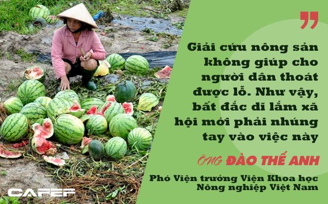 Phó Viện trưởng Viện Khoa học Nông nghiệp Việt Nam: Người thành thị không nên tham gia giải cứu nông sản! - Ảnh 1.