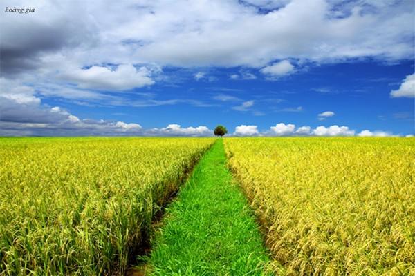 Mua gạo hữu cơ Việt Nam thì giá cao, hàng chợ lại lo mất an toàn, nhiều người Việt bắt đầu tìm đến gạo Campuchia - Ảnh 1.