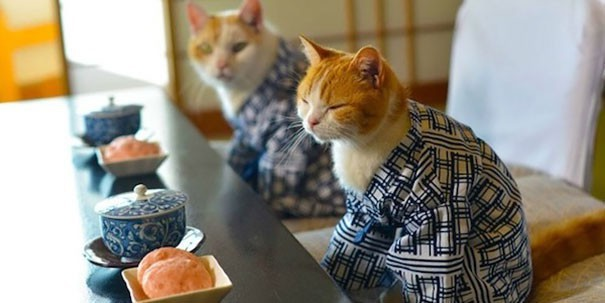 Bỏ cả nghìn đô để tìm mèo đi lạc và câu chuyện về nghề nghiệp đặc biệt chỉ có ở Nhật Bản - Ảnh 6.
