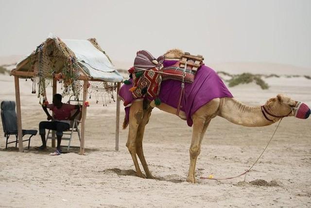 Hình ảnh đất nước Qatar hiện đại và đáng sống giữa sa mạc nóng bỏng - Ảnh 11.
