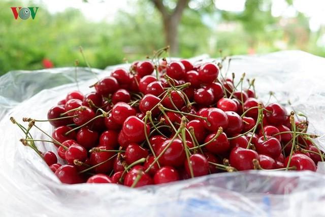 Trái cây ngoại siêu đắt tại Việt Nam là cây dại ở nước ngoài? - Ảnh 1.