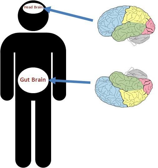 Có thể bạn chưa biết: Cơ thể chúng ta có đến hai bộ não! - Ảnh 1.