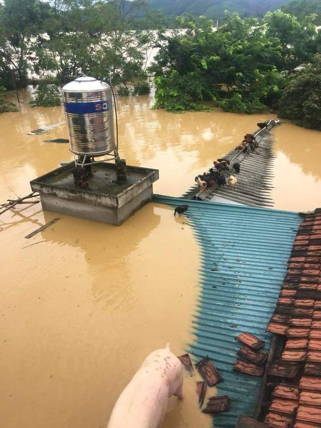 Những hình ảnh hiếm thấy trên đường phố sau trận ngập lụt kinh hoàng tại miền Bắc  - Ảnh 4.