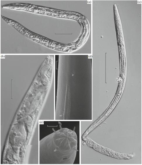 Sinh vật 42.000 năm tuổi hồi sinh sau khi được rã đông khỏi băng vĩnh cửu - Ảnh 1.