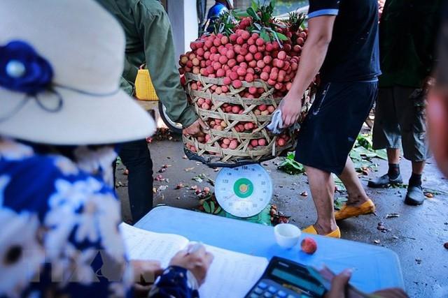 Hình ảnh vải thiều Lục Ngạn chín đỏ trong mùa thu hoạch  - Ảnh 11.