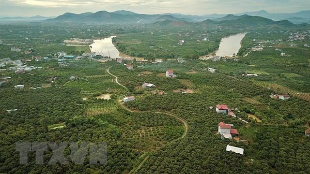 Hình ảnh vải thiều Lục Ngạn chín đỏ trong mùa thu hoạch  - Ảnh 7.