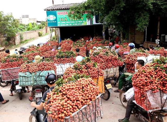 Hình ảnh vải thiều Lục Ngạn chín đỏ trong mùa thu hoạch  - Ảnh 9.