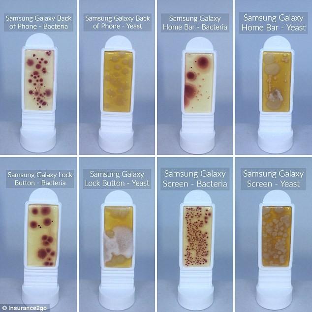 Hình ảnh kinh hoàng về độ bẩn của những chiếc điện thoại: Nhiều vi khuẩn gấp 10 lần bồn cầu - Ảnh 1.