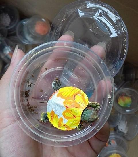 Sốt chuyển nhượng rùa sống siêu nhỏ siêu lạ làm đồ chơi: Ngã ngửa vì điều này - Ảnh 4.