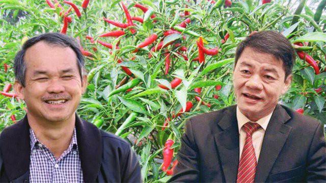 Tỷ phú Trần Bá Dương bơm gần 20.000 tỷ đồng giúp bầu Đức thoát khỏi mọi cơn bĩ cực: Cơ cấu lại nợ, vực dậy nông nghiệp, hoàn thành dự án BĐS ở Myanmar - Ảnh 1.