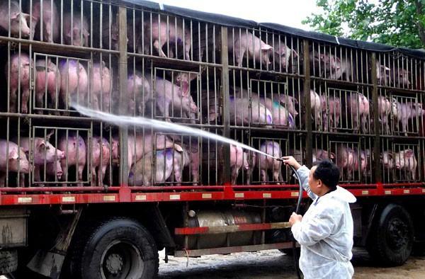 Trung Quốc: Đau đầu vì