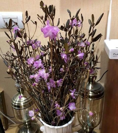 Xuất hiện loài hoa mới đỗ quyên ngủ đông khiến chợ hoa Tết lên cơn sốt - Ảnh 2.