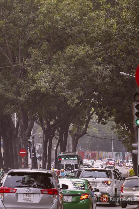 Chùm ảnh: Người Sài Gòn đặt hoa hồng trên gốc những hàng cây xanh bị đốn hạ ở đuờng Tôn Đức Thắng - Ảnh 19.