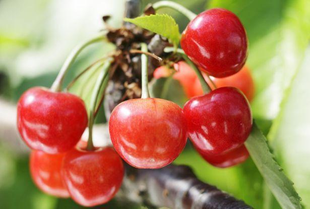Vì sao 1 số loại trái cây Nhật Bản có mức giá siêu đắt? - Ảnh 4.