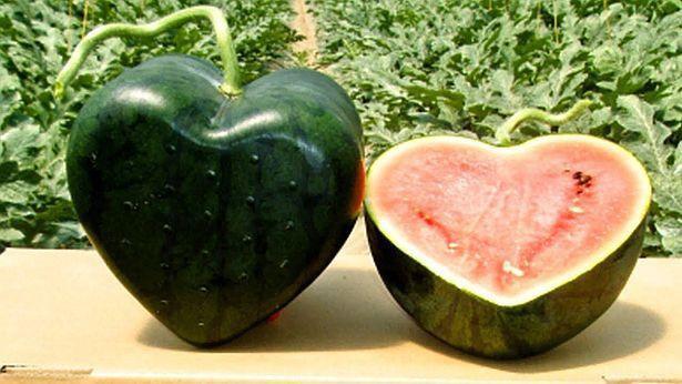 Vì sao 1 số loại trái cây Nhật Bản có mức giá siêu đắt? - Ảnh 6.