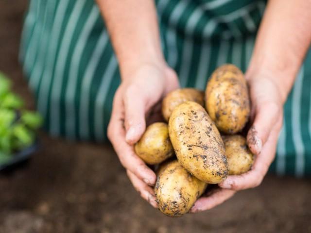 Ăn thực phẩm hữu cơ có thể ngăn ngừa ung thư hay không? Câu trả lời khiến nhiều người bất ngờ - Ảnh 1.
