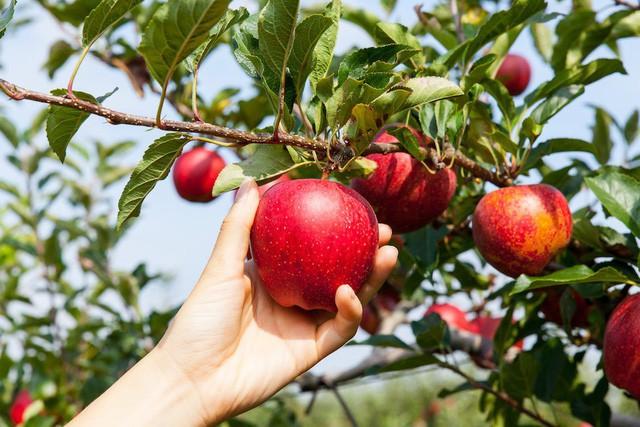 Ăn thực phẩm hữu cơ có thể ngăn ngừa ung thư hay không? Câu trả lời khiến nhiều người bất ngờ - Ảnh 4.