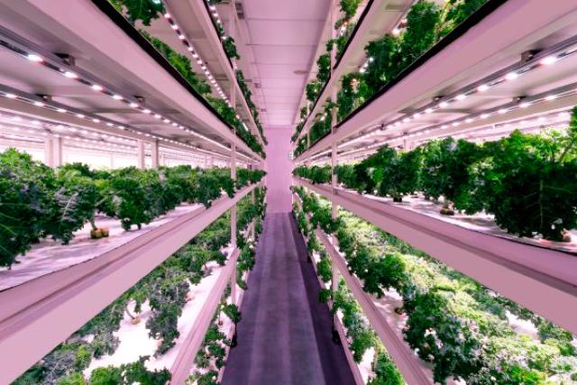 Nhờ 1 bài đăng trên Facebook, nhân viên ngân hàng này có start-up nông nghiệp trị giá hàng triệu USD - Ảnh 1.