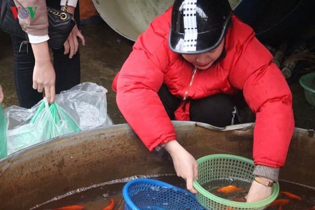Chợ cá lớn nhất Hà Nội nhộn nhịp trước lễ ông Công ông Táo - Ảnh 3.