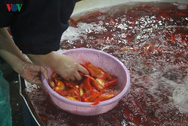 Chợ cá lớn nhất Hà Nội nhộn nhịp trước lễ ông Công ông Táo - Ảnh 1.