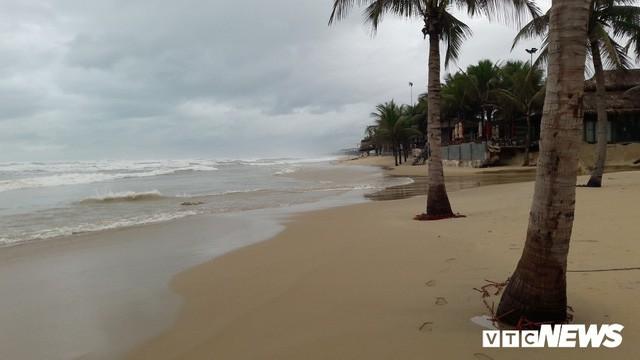Ảnh: Mang sắt thép quây chằng chịt cả trăm cây dừa ven bãi biển hấp dẫn nhất hành tinh - Ảnh 5.