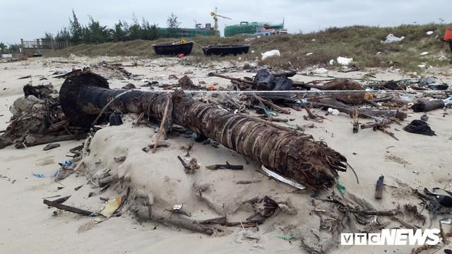 Ảnh: Mang sắt thép quây chằng chịt cả trăm cây dừa ven bãi biển hấp dẫn nhất hành tinh - Ảnh 7.