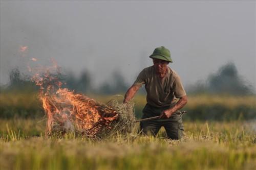 Khói đốt rơm rạ đang bủa vây ngoại thành Hà Nội - Ảnh 2.