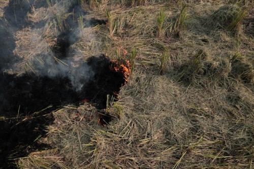 Khói đốt rơm rạ đang bủa vây ngoại thành Hà Nội - Ảnh 4.