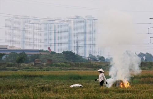 Khói đốt rơm rạ đang bủa vây ngoại thành Hà Nội - Ảnh 10.