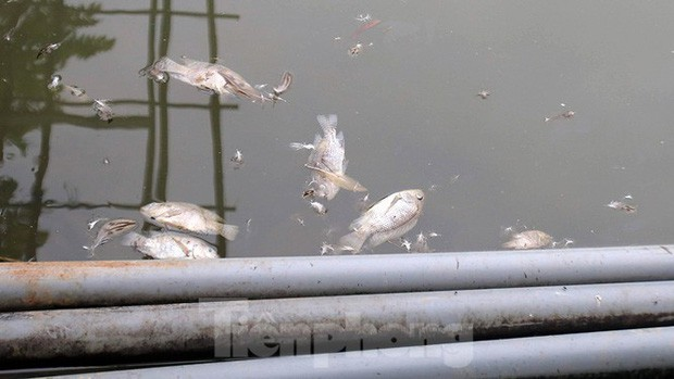 Toàn cảnh nhà máy nước sông Đà, nơi nguồn nước sạch cho Thủ đô đang bị đe dọa - Ảnh 9.