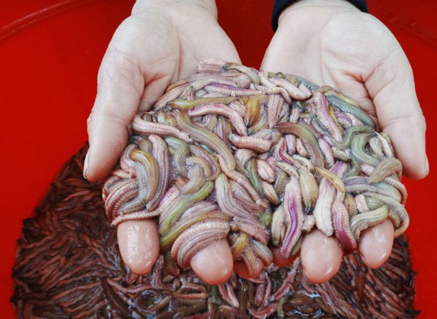 Cực phẩm mùa thu Hà Nội chứa đầy giá trị dinh dưỡng nhưng một số người lại được khuyến cáo không nên ăn - Ảnh 5.