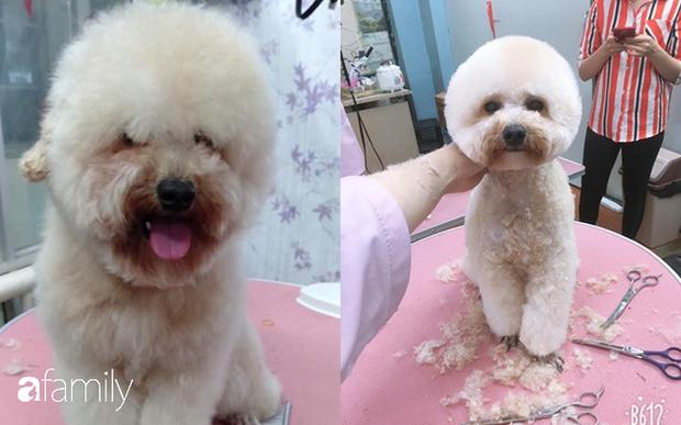 Cắt lông chó - nghề siêu hot lọt top 10 công việc có lương cao nhất ở Việt Nam, kiếm hơn 18 triệu đồng/tháng nhàn như chơi, liệu sự thật như thế nào? - Ảnh 4.
