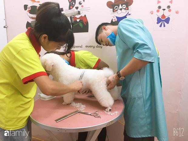 Cắt lông chó - nghề siêu hot lọt top 10 công việc có lương cao nhất ở Việt Nam, kiếm hơn 18 triệu đồng/tháng nhàn như chơi, liệu sự thật như thế nào? - Ảnh 9.