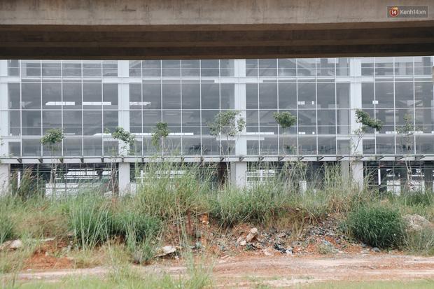 Bến xe Miền Đông mới trị giá 4.000 tỉ đồng đã hoàn thành nhưng vẫn án binh bất động, cỏ dại phủ kín xung quanh - Ảnh 6.