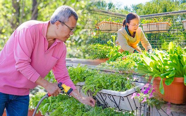 Câu chuyện của hai cô gái 9x về Hà Tĩnh mở trang trại rau quả sạch và giấc mơ sống gần hơn với thiên nhiên - Ảnh 1.