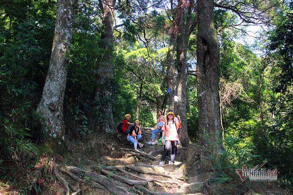 Hàng cây xích tùng 700 tuổi quý hiếm trên đỉnh thiêng Yên Tử - Ảnh 5.