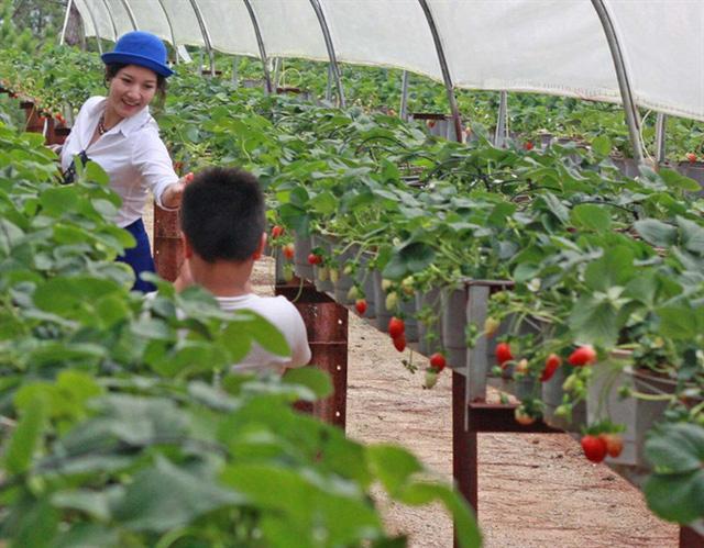 Câu chuyện đằng sau những trái dưa tiền tỉ của Nhật Bản: Căn nguyên từ tình yêu bất diệt của người trồng cây - Ảnh 11.