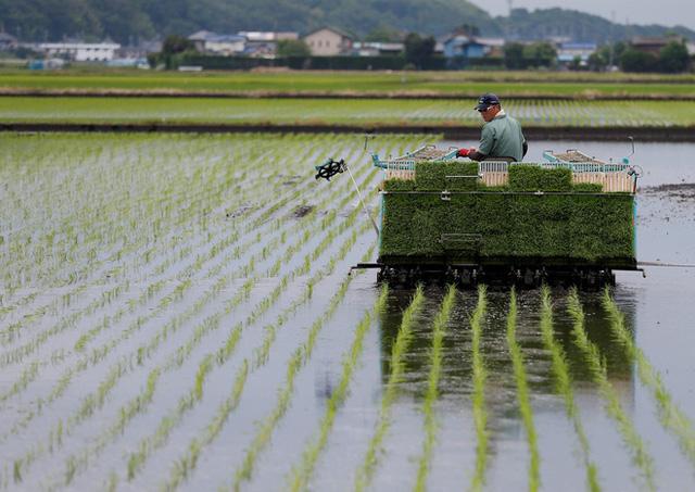 Câu chuyện đằng sau những trái dưa tiền tỉ của Nhật Bản: Căn nguyên từ tình yêu bất diệt của người trồng cây - Ảnh 13.