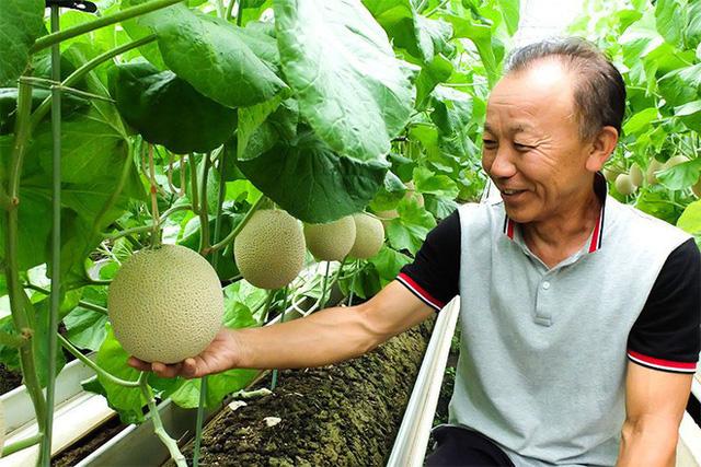 Câu chuyện đằng sau những trái dưa tiền tỉ của Nhật Bản: Căn nguyên từ tình yêu bất diệt của người trồng cây - Ảnh 7.