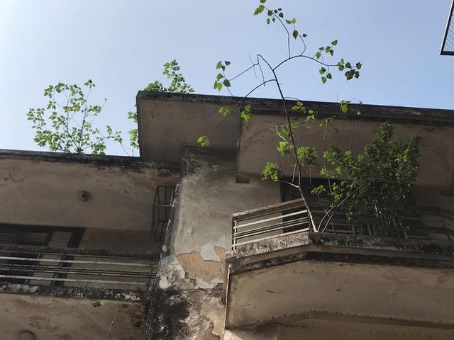 Bên trong căn biệt thự kiểu Pháp hoang tàn trên đất vàng Hà Nội trở thành nơi gửi xe - Ảnh 4.